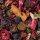 Fruchtiges Beerenkompott Früchtetee